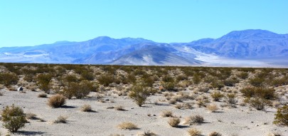 DVNP Desert