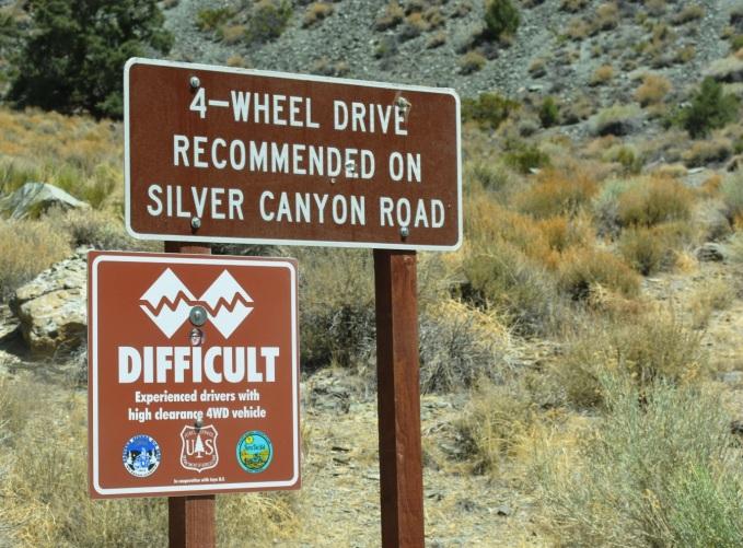 silver cyn sign